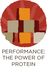 Performance: The Power Of Protein